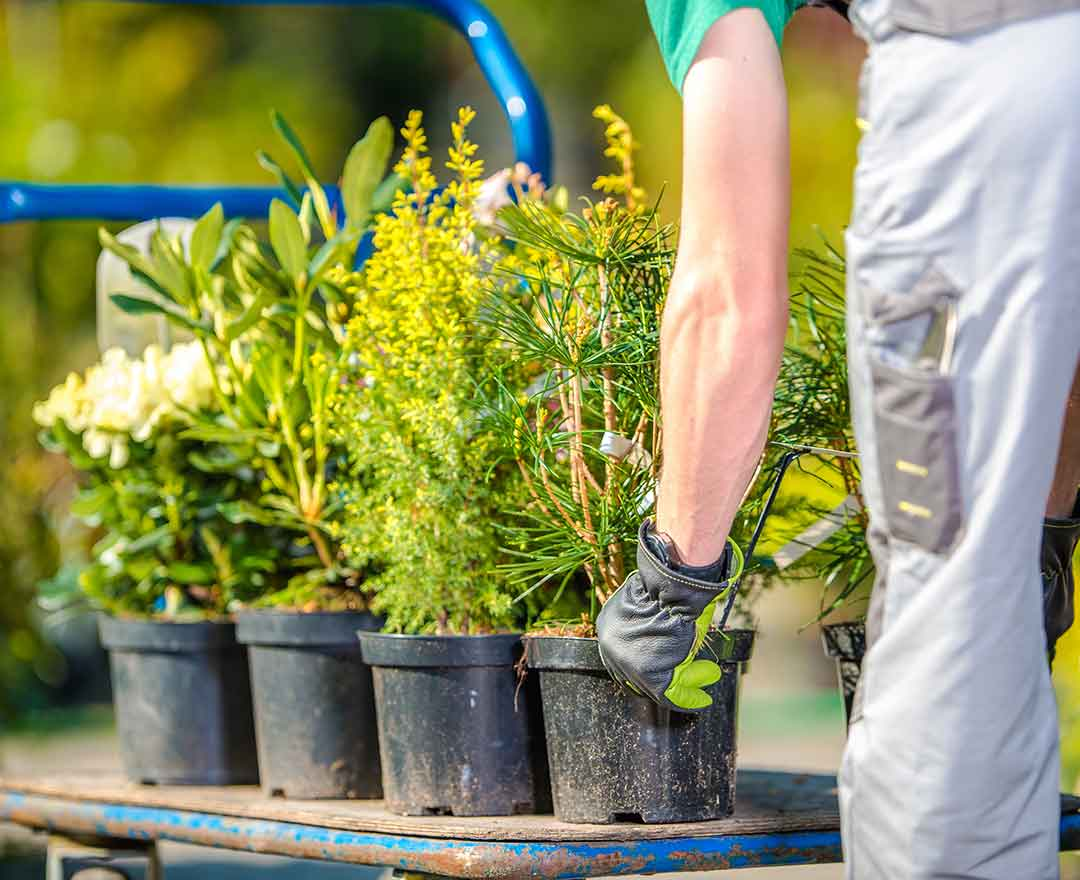 Three Big Reasons Why Landscaping Businesses Fail
