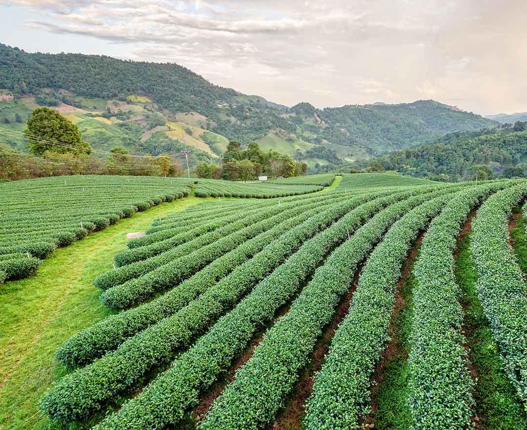 How Do I Write a Business Plan for a Landscape Business?