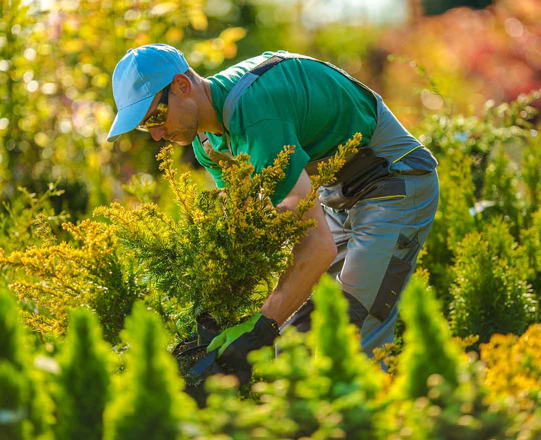 Create a Landscaping Business Plan