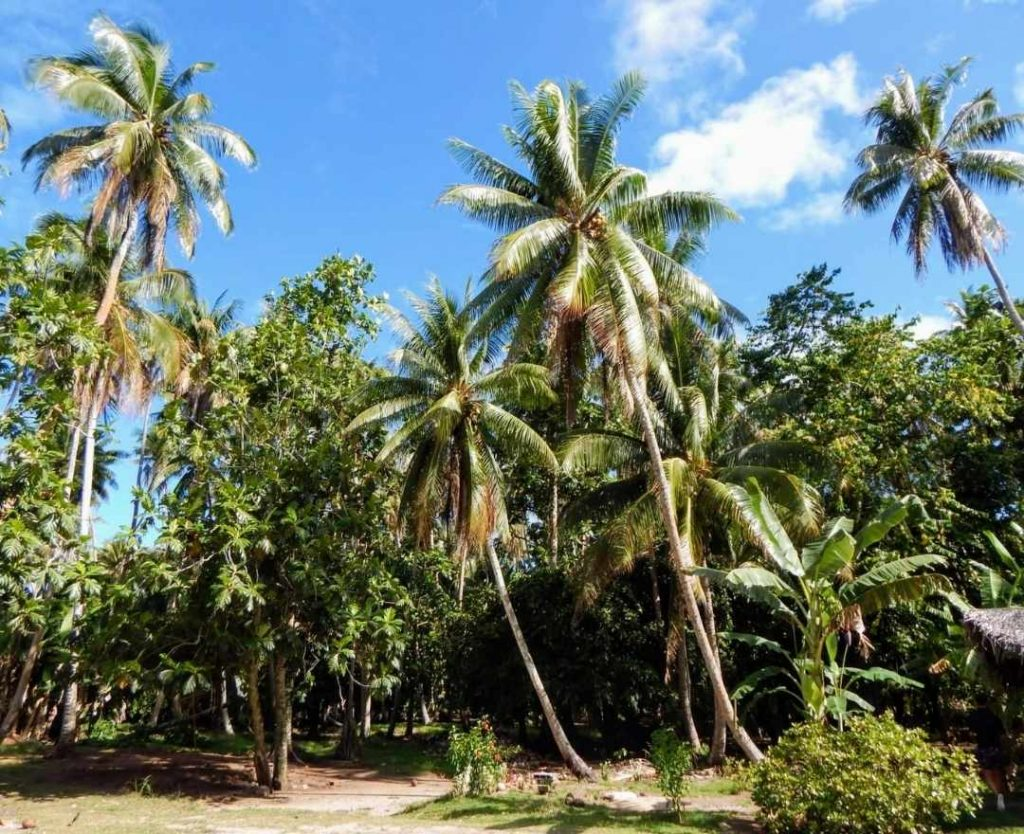 Eco-Tourism Camping in Cambodia A New Trend and Marketing Opportunities